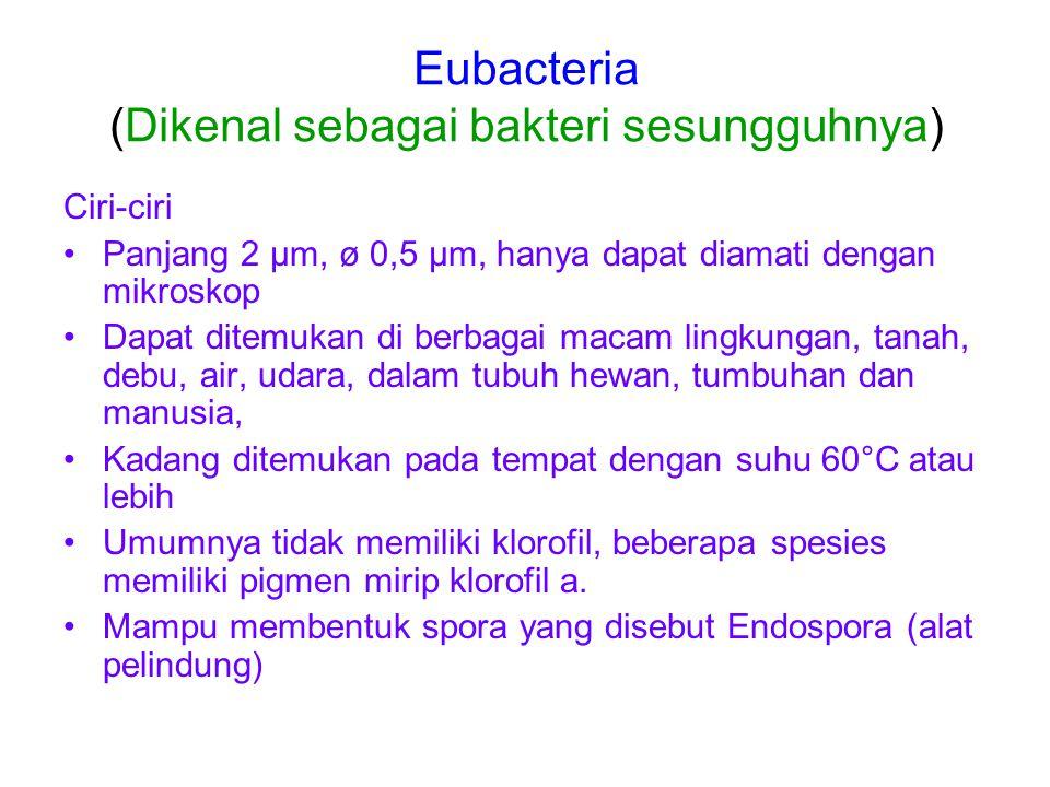 Eubacteria (Dikenal sebagai bakteri sesungguhnya) Ciri-ciri Panjang 2 µm, ø 0,5 µm, hanya dapat diamati dengan mikroskop Dapat ditemukan di berbagai macam lingkungan, tanah, debu, air, udara, dalam tubuh hewan, tumbuhan dan manusia, Kadang ditemukan pada tempat dengan suhu 60°C atau lebih Umumnya tidak memiliki klorofil, beberapa spesies memiliki pigmen mirip klorofil a.