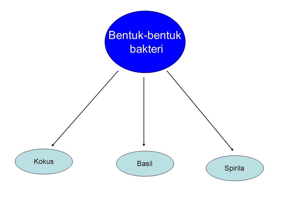 Bentuk-bentuk bakteri Kokus Basil Spirila