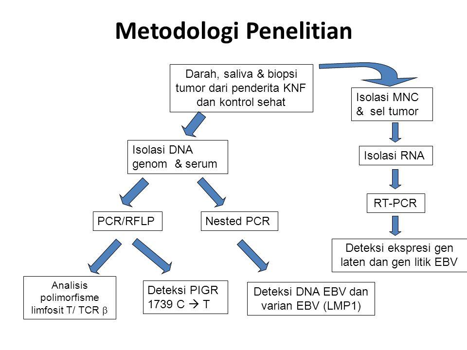 Metodologi Penelitian Deteksi PIGR 1739 C  T Analisis polimorfisme limfosit T/ TCR  Isolasi DNA genom & serum PCR/RFLP Darah, saliva & biopsi tumor dari penderita KNF dan kontrol sehat Nested PCR Deteksi DNA EBV dan varian EBV (LMP1) Isolasi MNC & sel tumor Isolasi RNA RT-PCR Deteksi ekspresi gen laten dan gen litik EBV