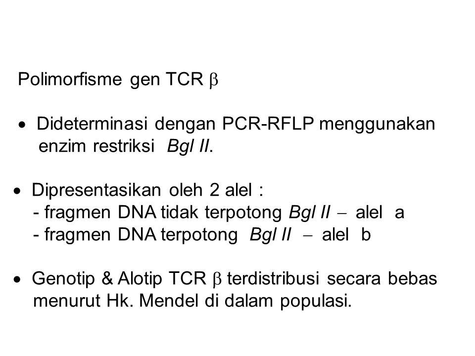 Polimorfisme gen TCR   Dideterminasi dengan PCR-RFLP menggunakan enzim restriksi Bgl II.  Dipresentasikan oleh 2 alel : - fragmen DNA tidak terpoto