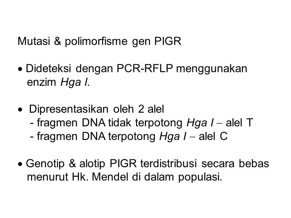 Mutasi & polimorfisme gen PIGR  Dideteksi dengan PCR-RFLP menggunakan enzim Hga I.  Dipresentasikan oleh 2 alel - fragmen DNA tidak terpotong Hga I
