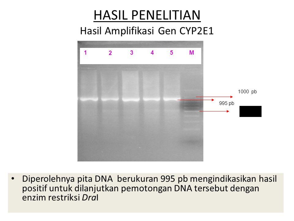 HASIL PENELITIAN Hasil Amplifikasi Gen CYP2E1 Diperolehnya pita DNA berukuran 995 pb mengindikasikan hasil positif untuk dilanjutkan pemotongan DNA tersebut dengan enzim restriksi DraI 1000 pb 500 pb 995 pb 1 2 3 4 5 M