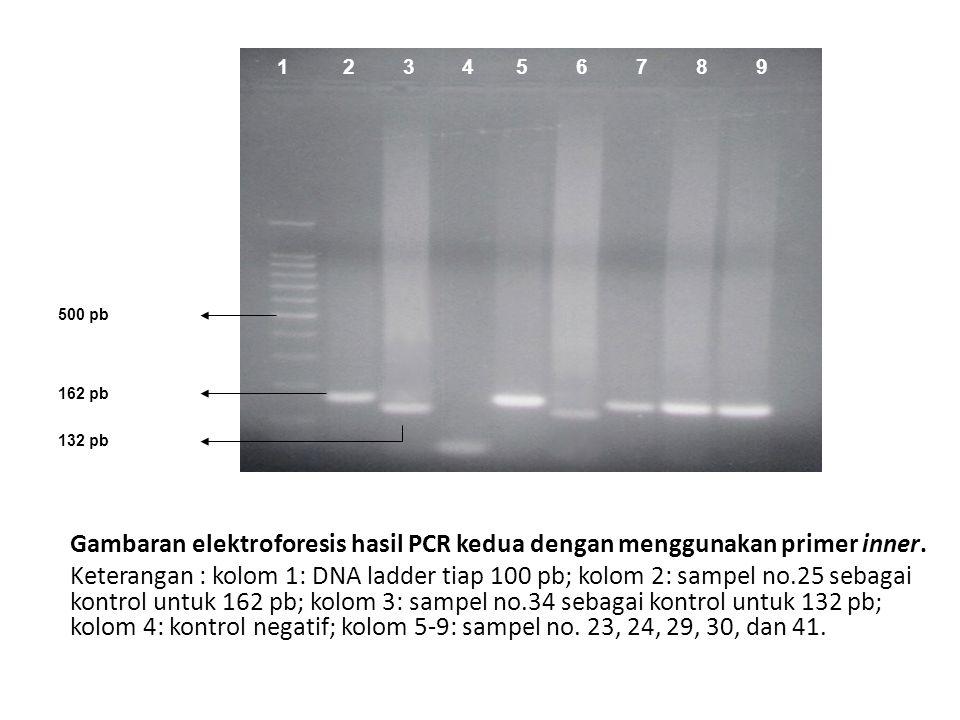 Gambaran elektroforesis hasil PCR kedua dengan menggunakan primer inner. Keterangan : kolom 1: DNA ladder tiap 100 pb; kolom 2: sampel no.25 sebagai k