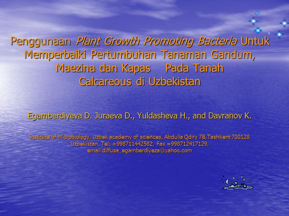 Penggunaan Plant Growth Promoting Bacteria Untuk Memperbaiki Pertumbuhan Tanaman Gandum, Maezina dan Kapas Pada Tanah Calcareous di Uzbekistan Egamberdiyeva D.