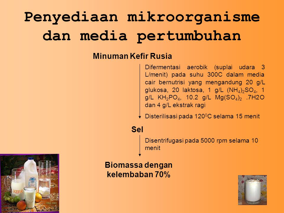 Penyediaan mikroorganisme dan media pertumbuhan Minuman Kefir Rusia Difermentasi aerobik (suplai udara 3 L/menit) pada suhu 300C dalam media cair bernutrisi yang mengandung 20 g/L glukosa, 20 laktosa, 1 g/L (NH 4 ) 2 SO 4, 1 g/L KH 2 PO 4, 10.2 g/L Mg(SO 4 ) 2.7H2O dan 4 g/L ekstrak ragi Disterilisasi pada 120 0 C selama 15 menit Sel Disentrifugasi pada 5000 rpm selama 10 menit Biomassa dengan kelembaban 70%