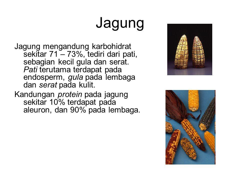 Jagung Jagung mengandung karbohidrat sekitar 71 – 73%, tediri dari pati, sebagian kecil gula dan serat.