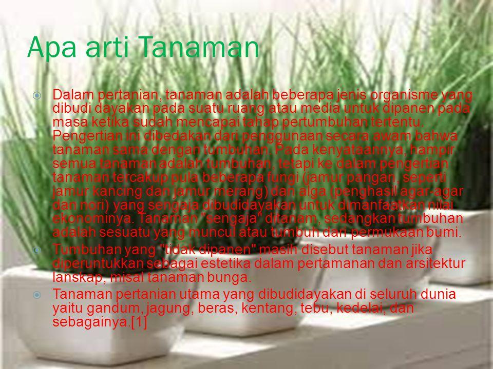 Apa arti Tanaman  Dalam pertanian, tanaman adalah beberapa jenis organisme yang dibudi dayakan pada suatu ruang atau media untuk dipanen pada masa ketika sudah mencapai tahap pertumbuhan tertentu.