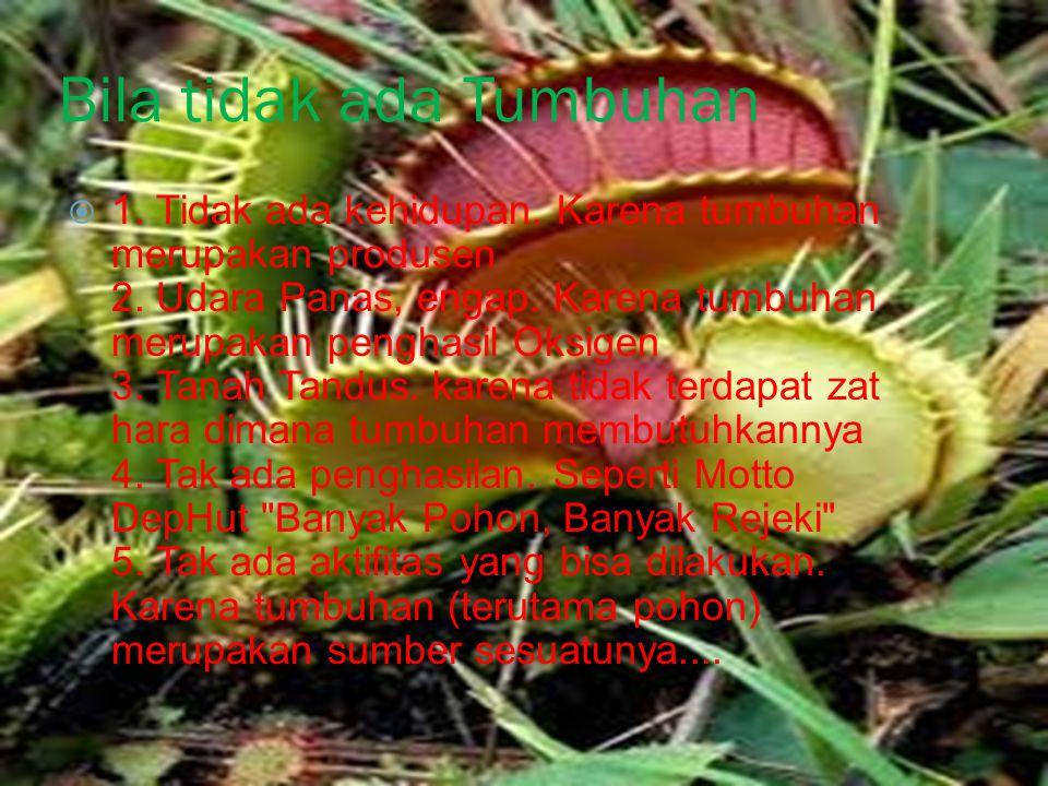 Bila tidak ada Tumbuhan  1.Tidak ada kehidupan. Karena tumbuhan merupakan produsen 2.