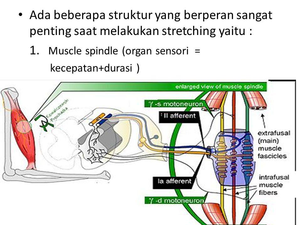 Ada beberapa struktur yang berperan sangat penting saat melakukan stretching yaitu : 1.