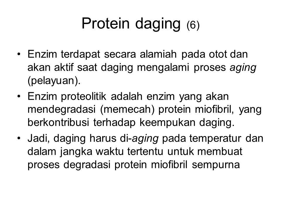 Protein daging (6) Enzim terdapat secara alamiah pada otot dan akan aktif saat daging mengalami proses aging (pelayuan). Enzim proteolitik adalah enzi