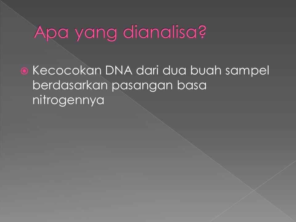  Kecocokan DNA dari dua buah sampel berdasarkan pasangan basa nitrogennya