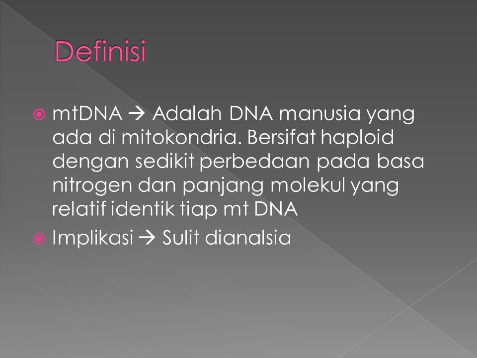  mtDNA  Adalah DNA manusia yang ada di mitokondria. Bersifat haploid dengan sedikit perbedaan pada basa nitrogen dan panjang molekul yang relatif id