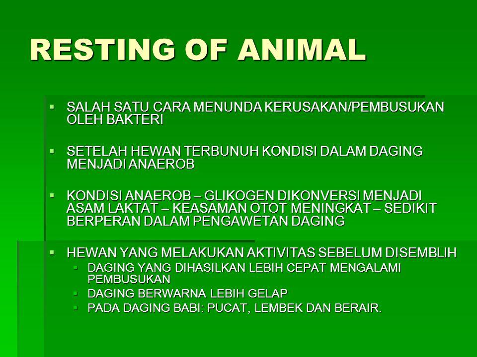 RESTING OF ANIMAL  SALAH SATU CARA MENUNDA KERUSAKAN/PEMBUSUKAN OLEH BAKTERI  SETELAH HEWAN TERBUNUH KONDISI DALAM DAGING MENJADI ANAEROB  KONDISI
