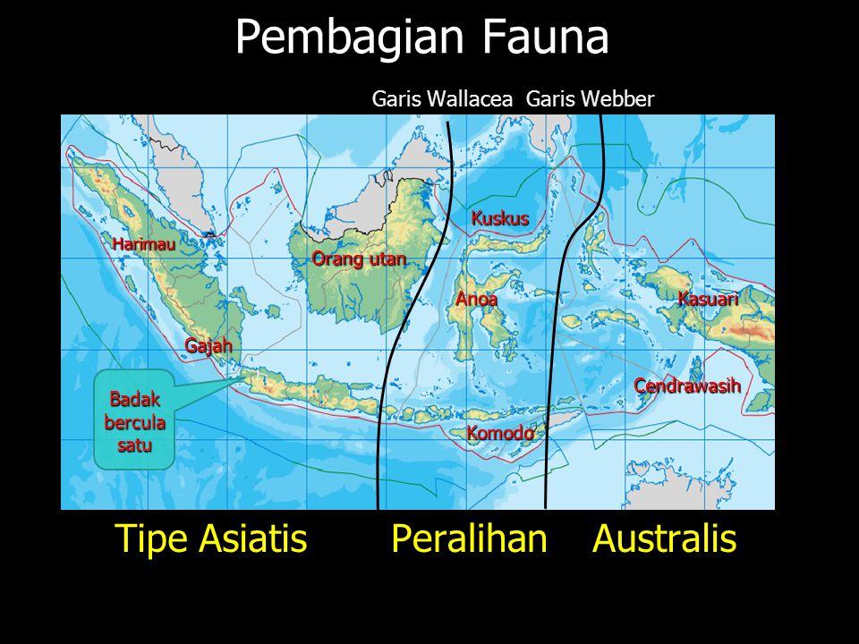 JALUR PEGUNUNGAN Sirkum Mediterania Sirkum Mediterania Sirkum Pasifik