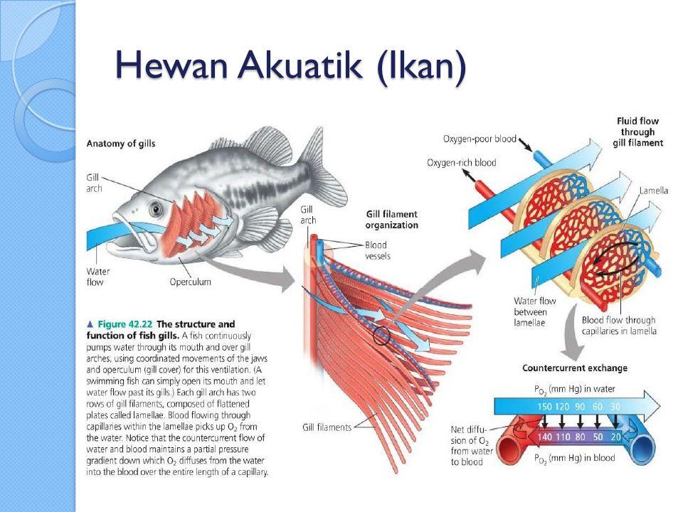 Insekta Sistem pernafasan dengan menggunakan trakea.