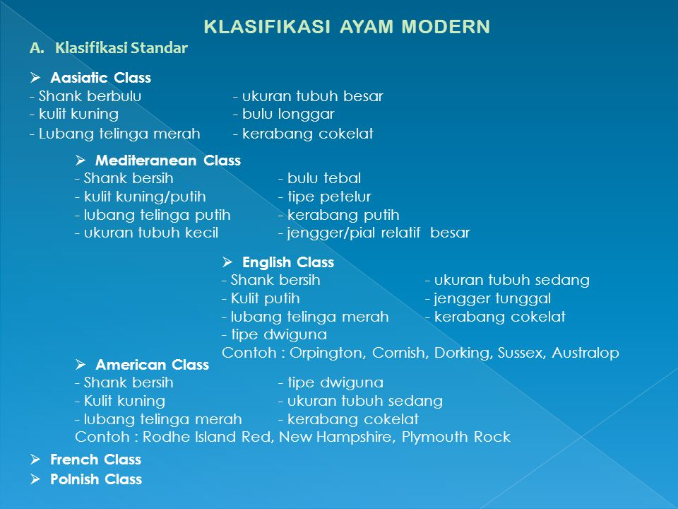 KLASIFIKASI AYAM MODERN A.Klasifikasi Standar  Aasiatic Class - Shank berbulu - ukuran tubuh besar - kulit kuning- bulu longgar - Lubang telinga mera
