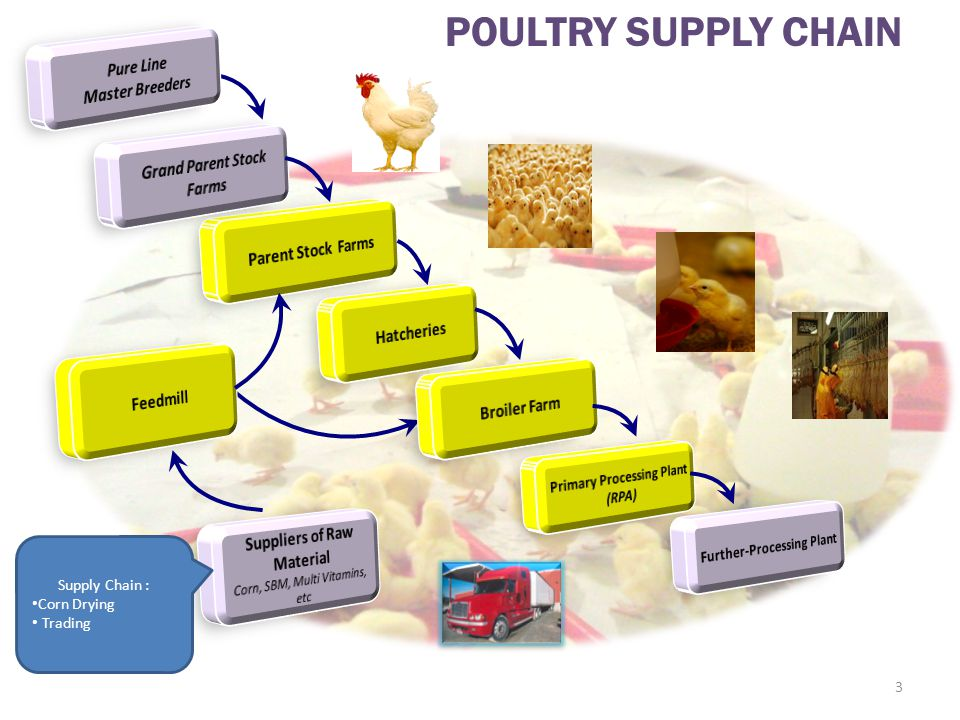 Growth Trend in Poultry Meat Global Production (in millions tons) Source: FAO Food Outlook, June 2009 4