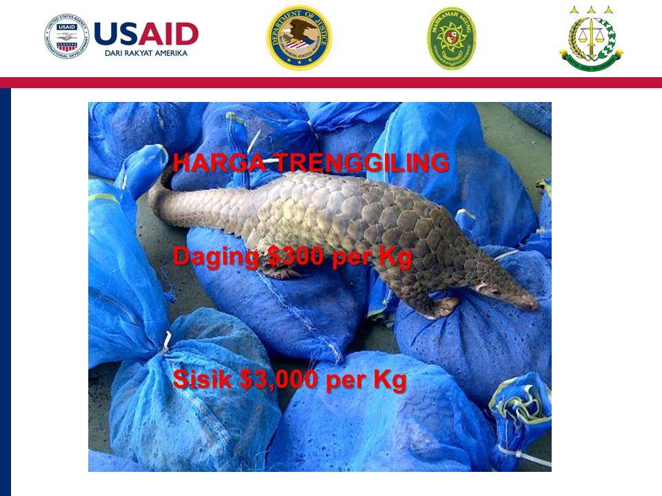 HARGA TRENGGILING Daging $300 per Kg Sisik $3,000 per Kg