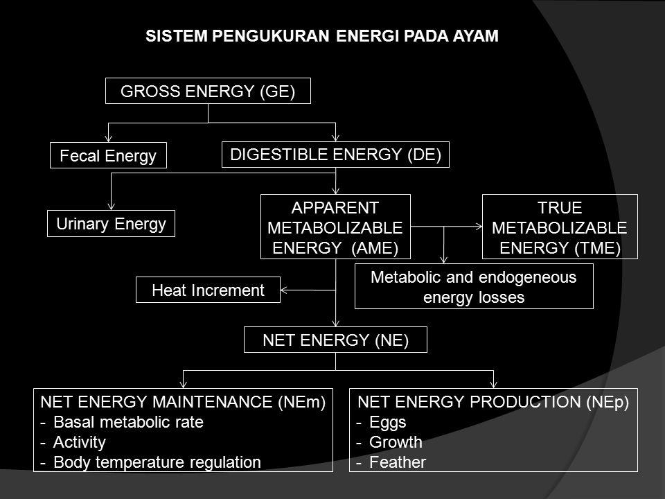 SISTEM PENGUKURAN ENERGI PADA AYAM GROSS ENERGY (GE) Urinary Energy Fecal Energy DIGESTIBLE ENERGY (DE) TRUE METABOLIZABLE ENERGY (TME) APPARENT METAB