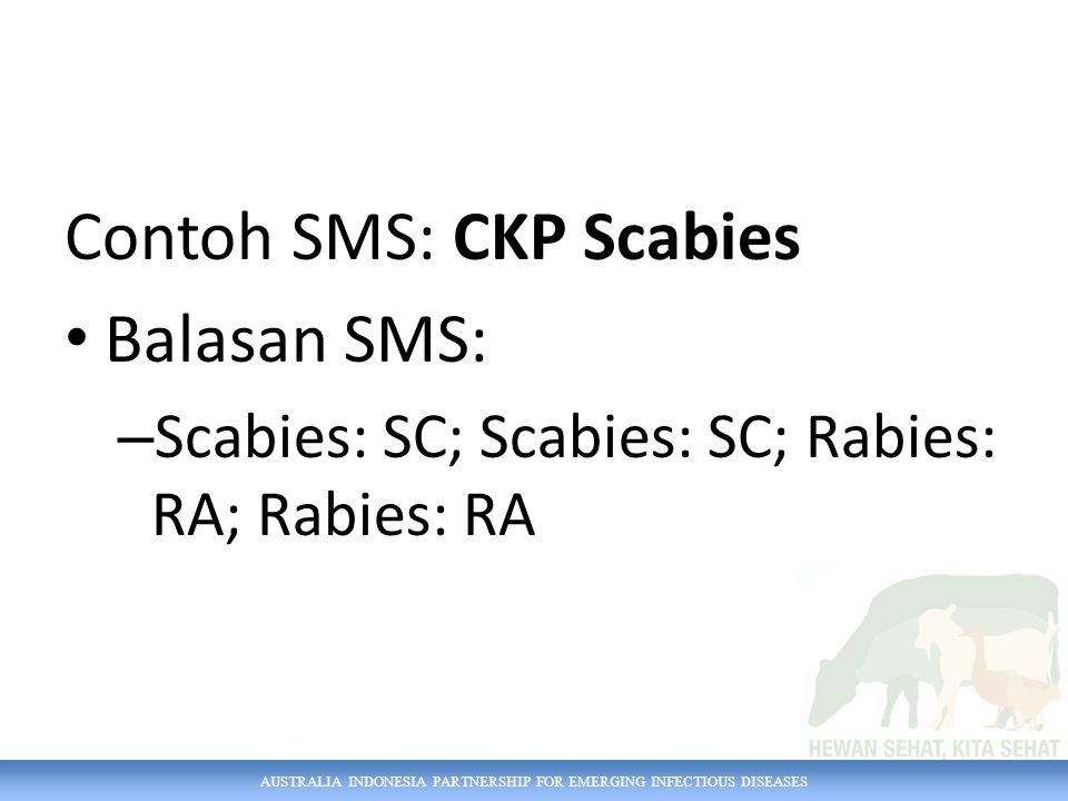 AUSTRALIA INDONESIA PARTNERSHIP FOR EMERGING INFECTIOUS DISEASES Contoh SMS: CKP Scabies Balasan SMS: – Scabies: SC; Scabies: SC; Rabies: RA; Rabies: RA
