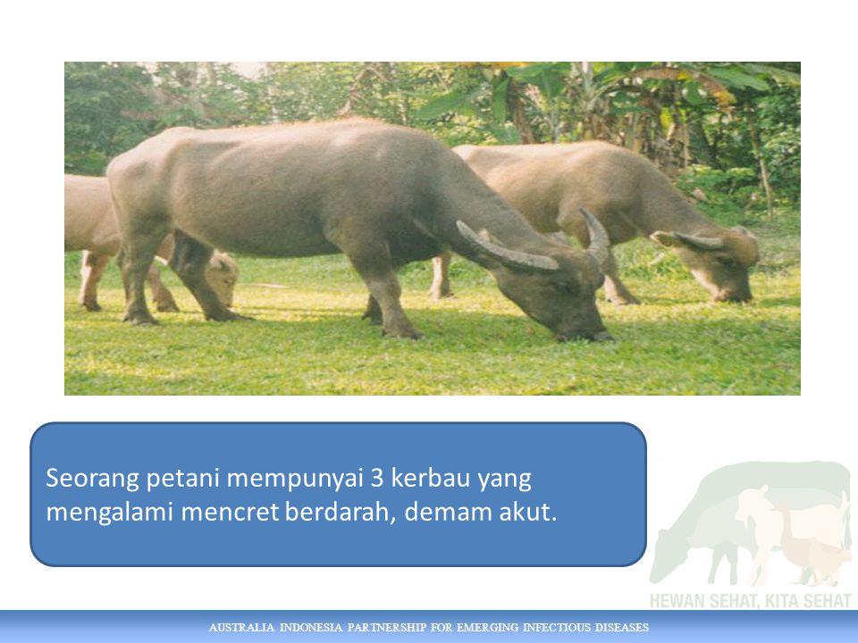 AUSTRALIA INDONESIA PARTNERSHIP FOR EMERGING INFECTIOUS DISEASES Seorang petani mempunyai 3 kerbau yang mengalami mencret berdarah, demam akut.