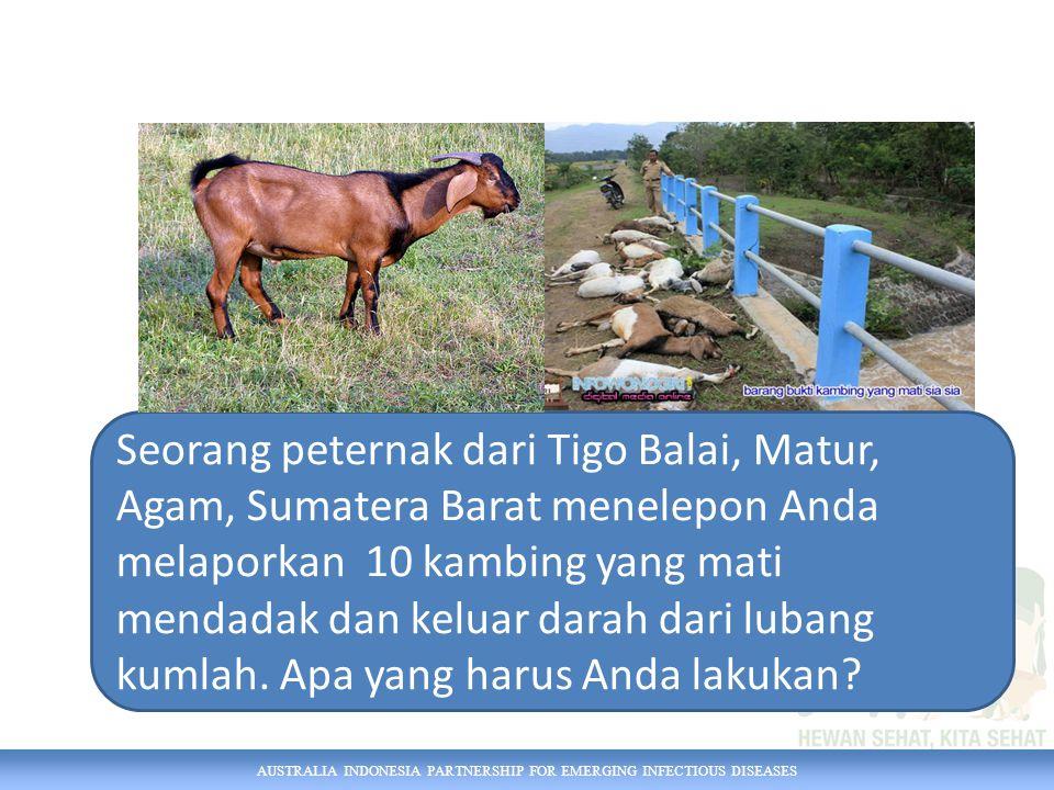AUSTRALIA INDONESIA PARTNERSHIP FOR EMERGING INFECTIOUS DISEASES Seorang peternak dari Tigo Balai, Matur, Agam, Sumatera Barat menelepon Anda melaporkan 10 kambing yang mati mendadak dan keluar darah dari lubang kumlah.