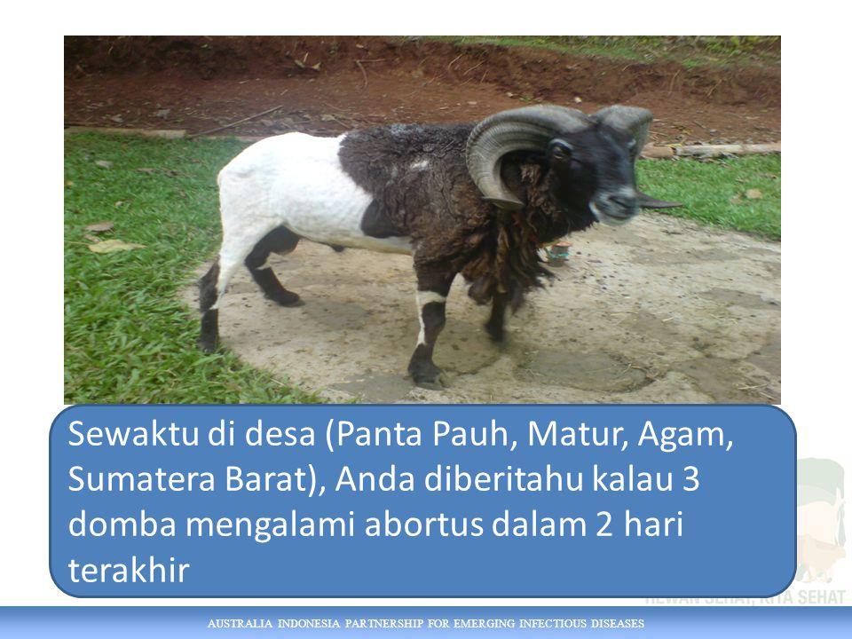 AUSTRALIA INDONESIA PARTNERSHIP FOR EMERGING INFECTIOUS DISEASES Sewaktu di desa (Panta Pauh, Matur, Agam, Sumatera Barat), Anda diberitahu kalau 3 domba mengalami abortus dalam 2 hari terakhir