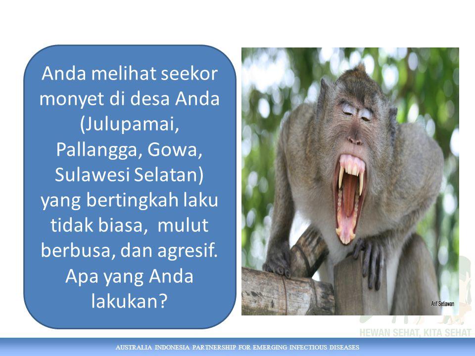 AUSTRALIA INDONESIA PARTNERSHIP FOR EMERGING INFECTIOUS DISEASES Anda melihat seekor monyet di desa Anda (Julupamai, Pallangga, Gowa, Sulawesi Selatan) yang bertingkah laku tidak biasa, mulut berbusa, dan agresif.