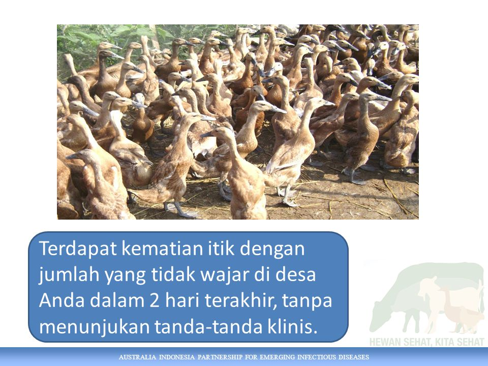 AUSTRALIA INDONESIA PARTNERSHIP FOR EMERGING INFECTIOUS DISEASES Terdapat kematian itik dengan jumlah yang tidak wajar di desa Anda dalam 2 hari terakhir, tanpa menunjukan tanda-tanda klinis.