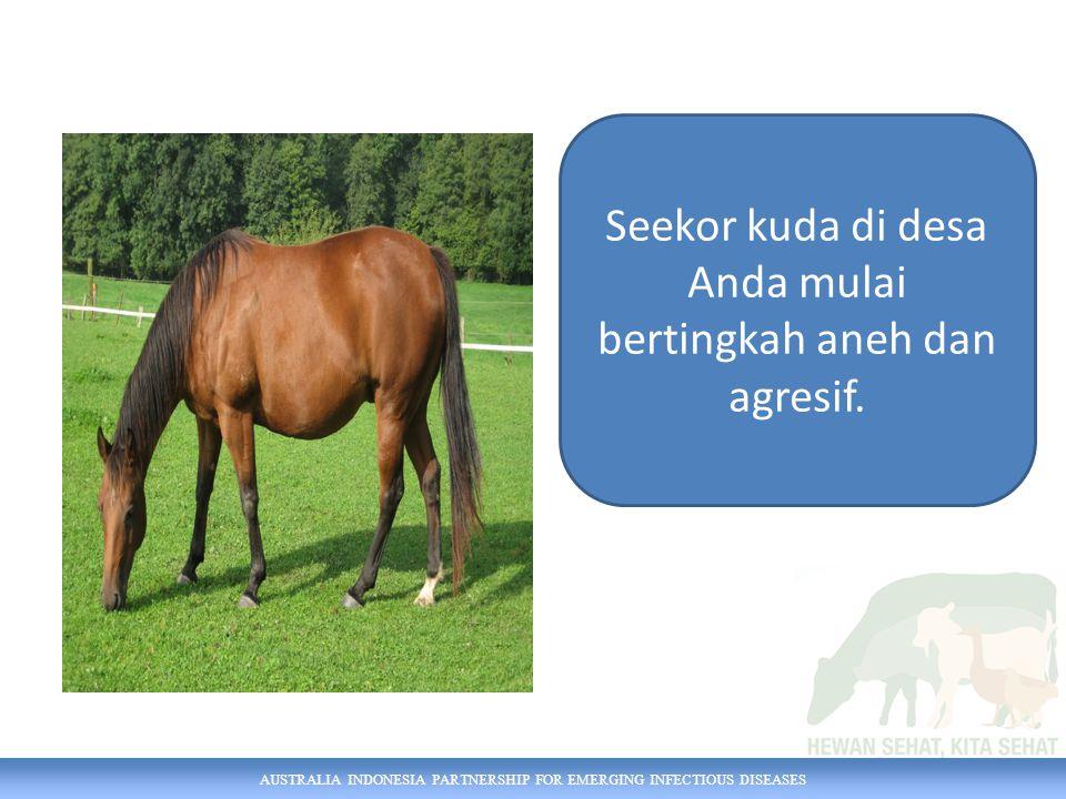 AUSTRALIA INDONESIA PARTNERSHIP FOR EMERGING INFECTIOUS DISEASES Seekor kuda di desa Anda mulai bertingkah aneh dan agresif.