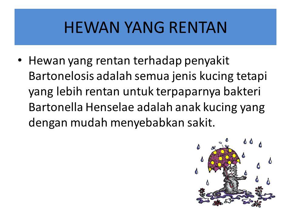 HEWAN YANG RENTAN Hewan yang rentan terhadap penyakit Bartonelosis adalah semua jenis kucing tetapi yang lebih rentan untuk terpaparnya bakteri Bartonella Henselae adalah anak kucing yang dengan mudah menyebabkan sakit.