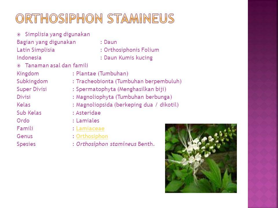  Simplisia yang digunakan Bagian yang digunakan: Daun Latin Simplisia: Orthosiphonis Folium Indonesia: Daun Kumis kucing  Tanaman asal dan famili Ki