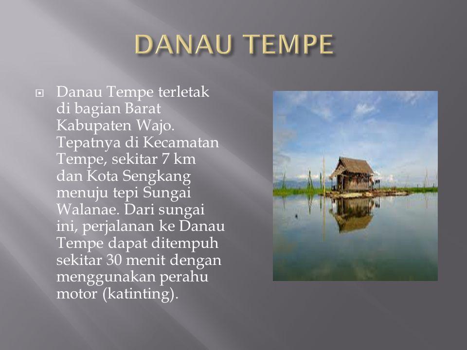 Danau Tempe terletak di bagian Barat Kabupaten Wajo.