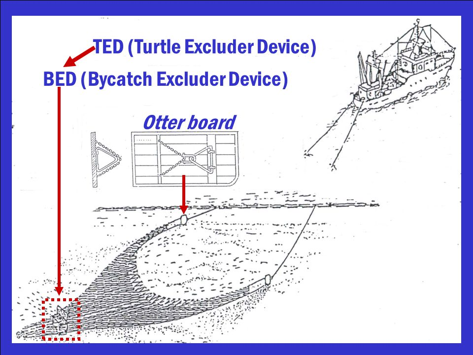 BED (Bycatch Excluder Device) TED (Turtle Excluder Device) Otter board