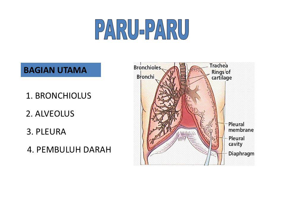 Fungsi ginjal: Membuang sisa metabolisme dari tubuh. Mengatur konsentrasi ion hidrogen darah dengan mengeluarkan kelebihan asam atau basa. Mengatur te