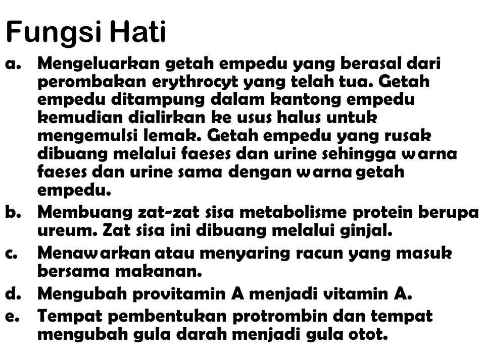 Hati (Hepar) Hati (hepar) adalah kelenjar terbesar di dalam tubuh. Hati terletak di bagian teratas dalam rongga abdomen di sebelah kanan di bawah diaf