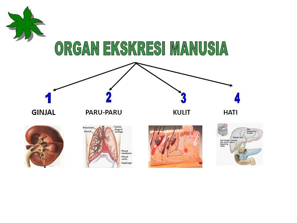 Tujuan Pembelajaran Peserta didik mampu: 1.Mendeskripsikan organ-organ penyusun sistem eskresi manusia 2.Menggambar struktur organ ekskresi pada manusia dan memberi keterangan 3.Menjelaskan fungsi organ ekskresi pada manusia 4.Mendeskripsikan macam-macam kelainan dan penyakit pada manusia yang dijumpai dalam kehidupan sehari-hari 5.Menjelaskan cara mengatasi kelainan dan penyakit pada sistem eskresi yang dijumpai dalam kehidupan sehari-hari 6.Mendeskripsikan pentingnya menjaga kesehatan organ sistem eskresi pada manusia