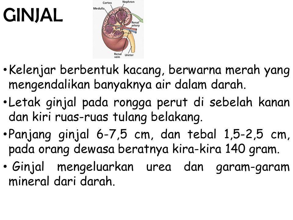 4.Hematuria Ditemukan erythrocyt pada urine.