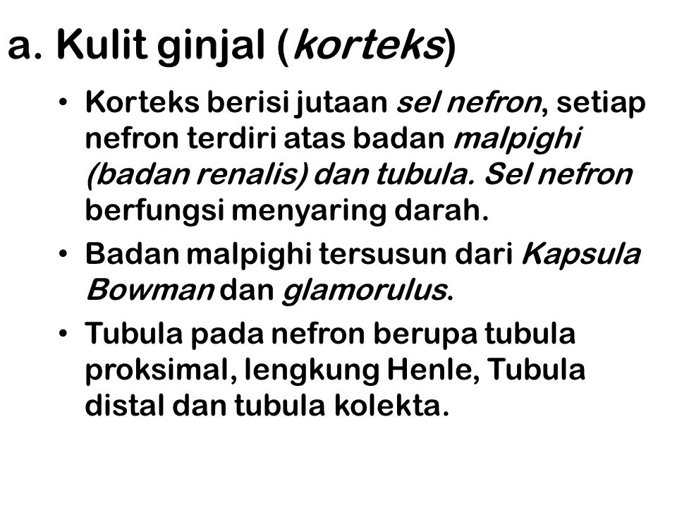 Bagian-bagian Ginjal Kulit ginjal (Korteks) Sumsum ginjal (medula) Rongga ginjal (pelvis)