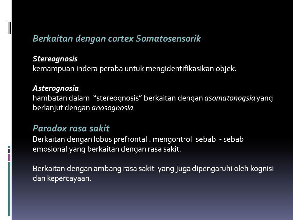 "Berkaitan dengan cortex Somatosensorik Stereognosis kemampuan indera peraba untuk mengidentifikasikan objek. Asterognosia hambatan dalam ""stereognosis"