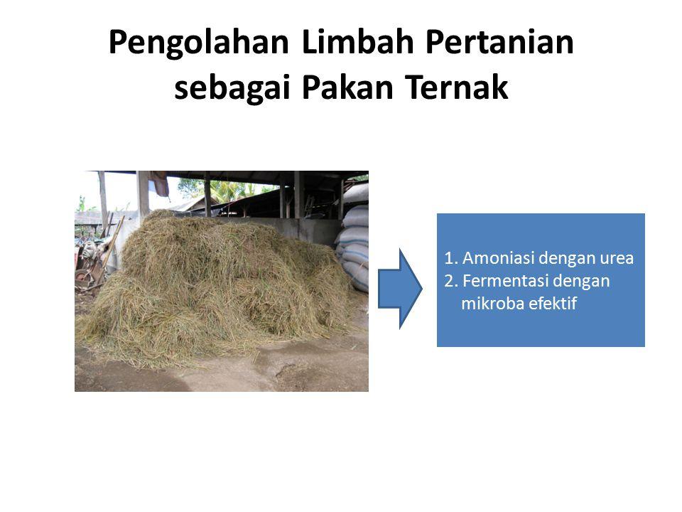 Pengolahan Limbah Pertanian sebagai Pakan Ternak 1. Amoniasi dengan urea 2. Fermentasi dengan mikroba efektif