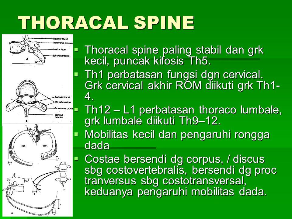 THORACAL SPINE  Thoracal spine paling stabil dan grk kecil, puncak kifosis Th5.  Th1 perbatasan fungsi dgn cervical. Grk cervical akhir ROM diikuti