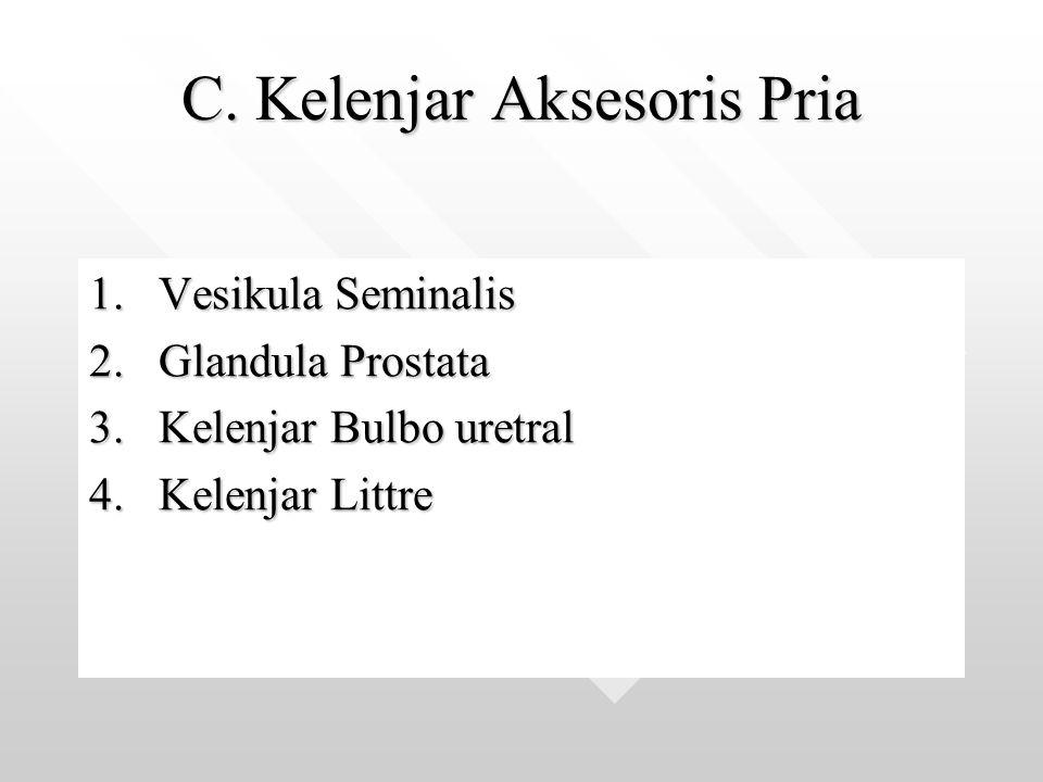C. Kelenjar Aksesoris Pria 1.Vesikula Seminalis 2.Glandula Prostata 3.Kelenjar Bulbo uretral 4.Kelenjar Littre