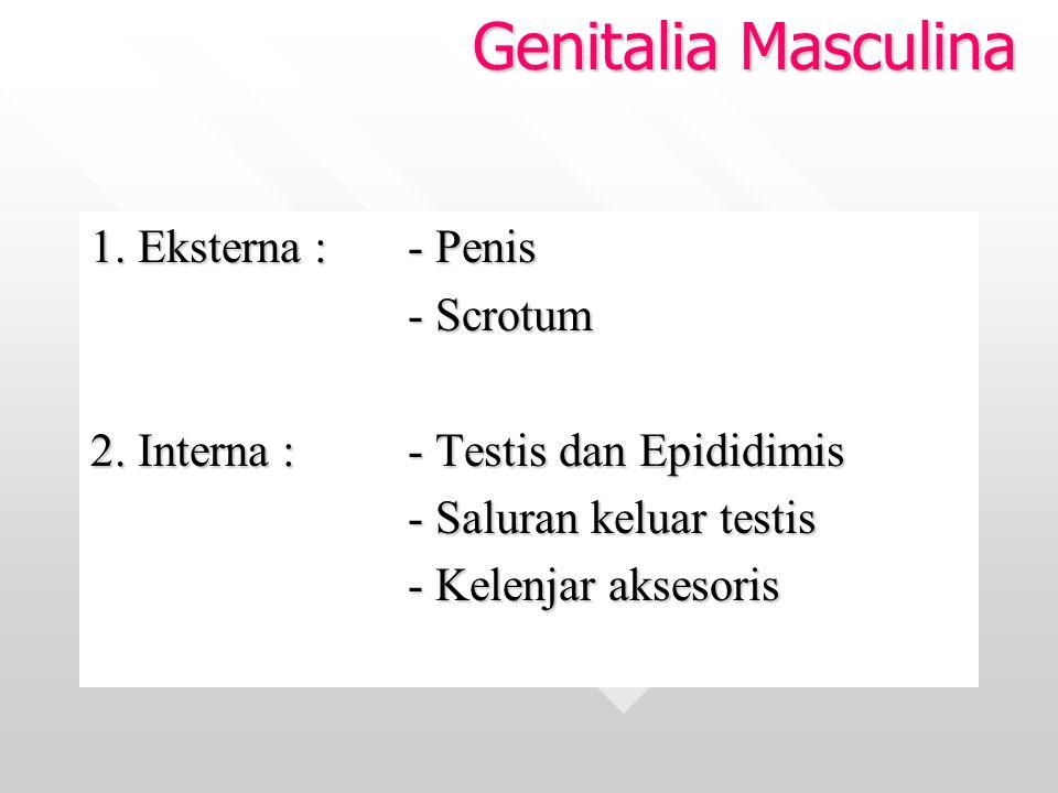 Genitalia Masculina 1. Eksterna : - Penis - Scrotum - Scrotum 2. Interna :- Testis dan Epididimis - Saluran keluar testis - Saluran keluar testis - Ke