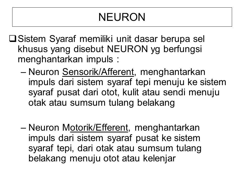 NEURON  Sistem Syaraf memiliki unit dasar berupa sel khusus yang disebut NEURON yg berfungsi menghantarkan impuls : –Neuron Sensorik/Afferent, mengha