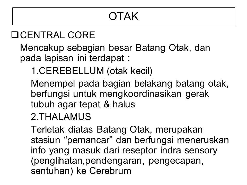 OTAK 3.HYPOTHALAMUS Terletak di bawah thalamus, merupakan pusat integrasi tertinggi dari susunan syaraf otonom.