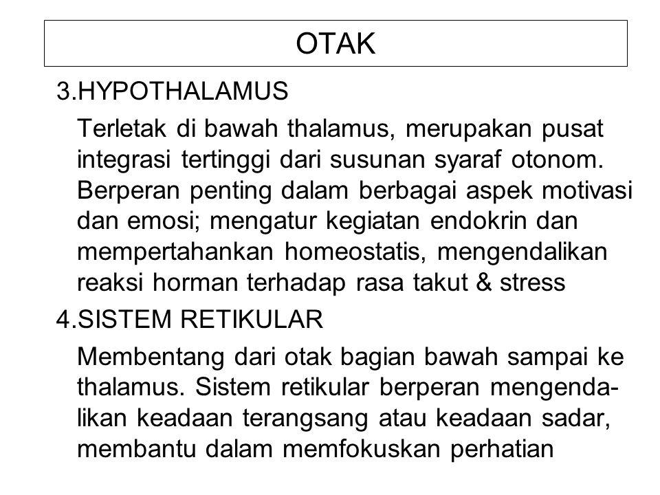 OTAK 3.HYPOTHALAMUS Terletak di bawah thalamus, merupakan pusat integrasi tertinggi dari susunan syaraf otonom. Berperan penting dalam berbagai aspek