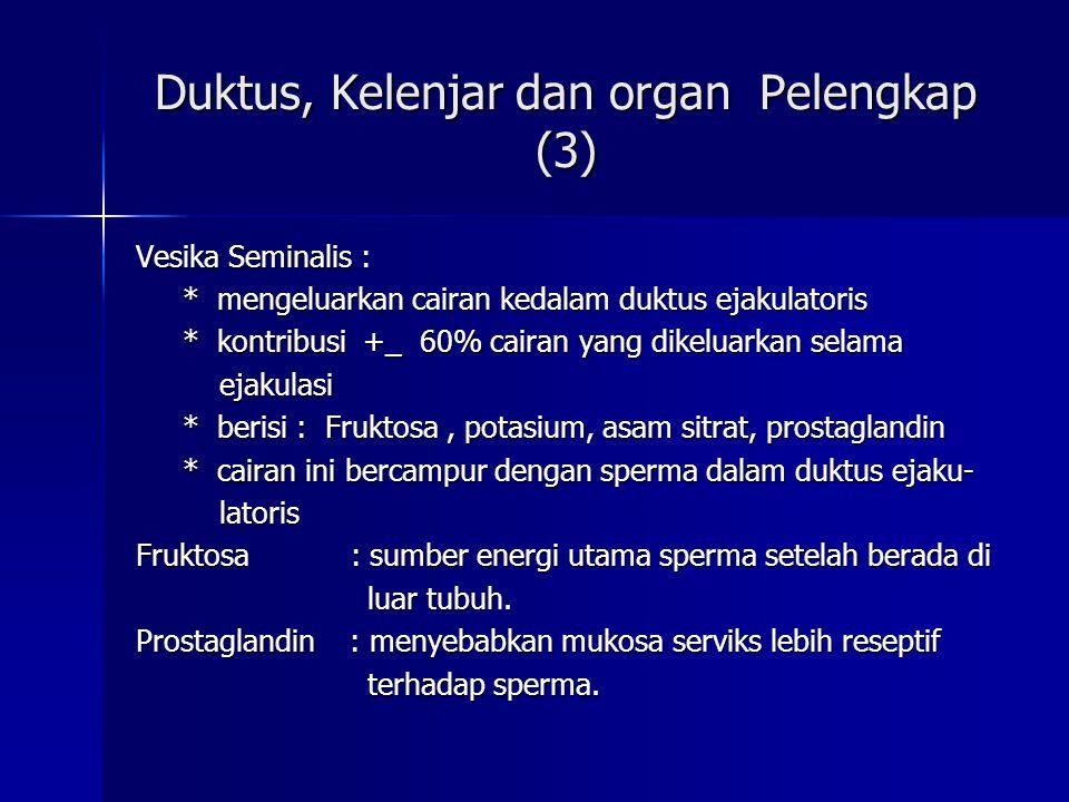 Duktus, Kelenjar dan organ Pelengkap (3) Vesika Seminalis : * mengeluarkan cairan kedalam duktus ejakulatoris * mengeluarkan cairan kedalam duktus eja
