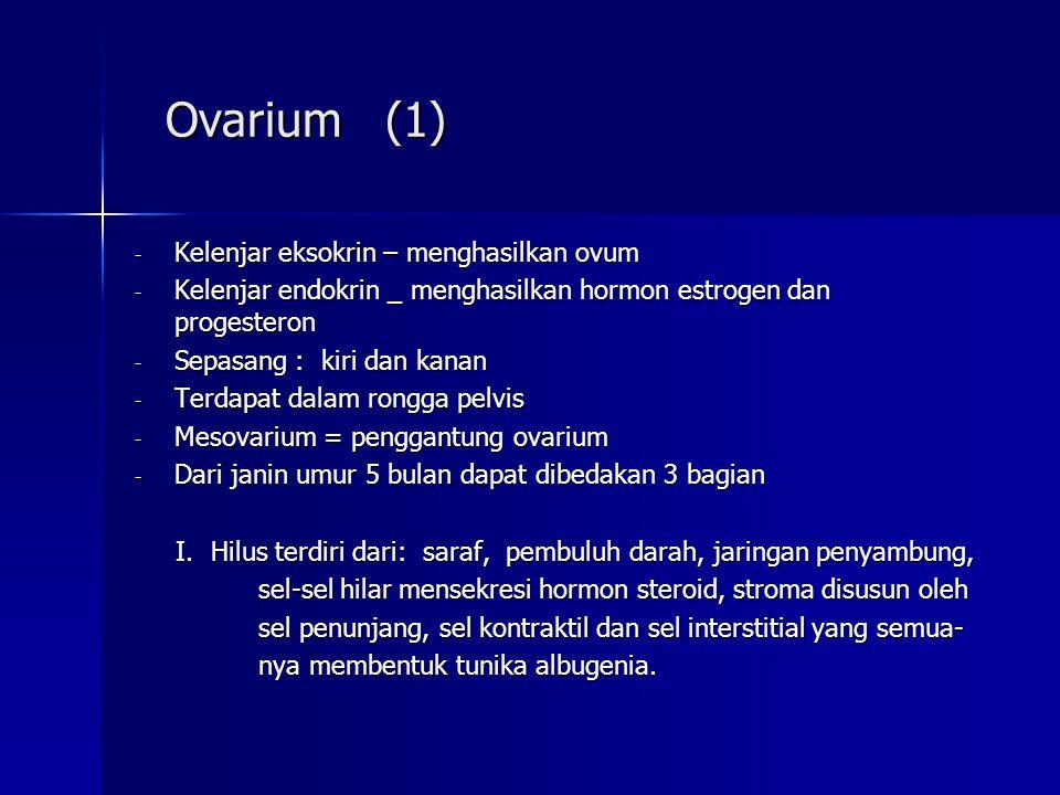 Ovarium (1) Ovarium (1) - Kelenjar eksokrin – menghasilkan ovum - Kelenjar endokrin _ menghasilkan hormon estrogen dan progesteron - Sepasang : kiri d