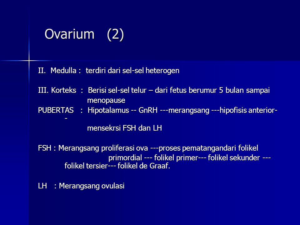 Ovarium (2) Ovarium (2) II. Medulla : terdiri dari sel-sel heterogen III. Korteks : Berisi sel-sel telur – dari fetus berumur 5 bulan sampai menopause